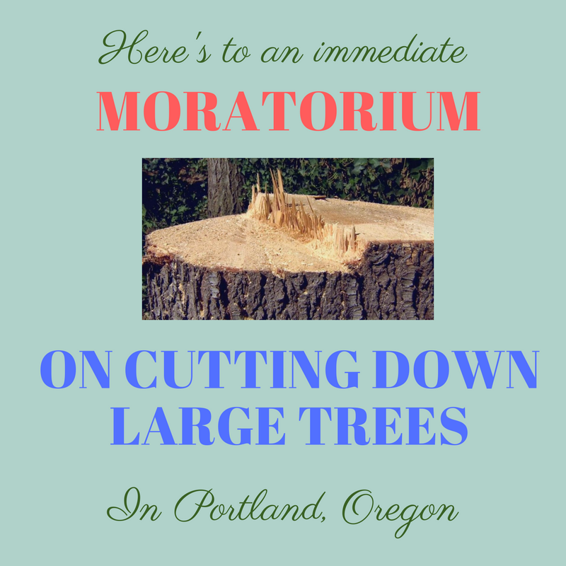 moratorium on tree cutting in portland