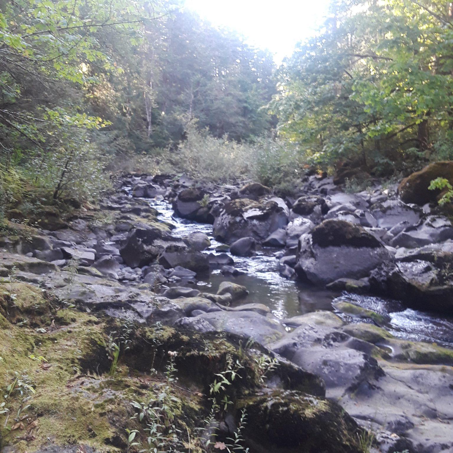 Creek near Carson, WA